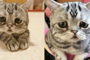 「世上最委屈的貓」笑了!拔拔開心跟全世界分享,網友:好萌啊