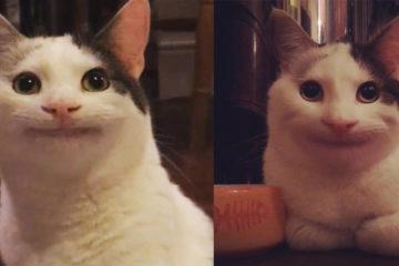 不淮養寵物!他傳「貓咪禮貌微笑照」後,房東秒融化:就讓她住吧