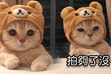 喵喵戴熊帽超可愛!下一秒沒耐心變臉:拍夠了沒?