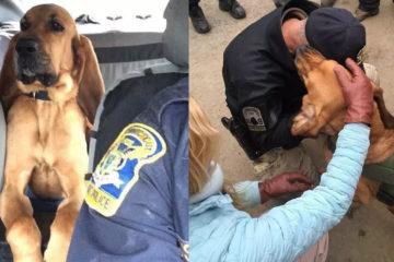「搜救犬」不小心掉入谷中,上百名同事出動救援:牠是我們的隊友!