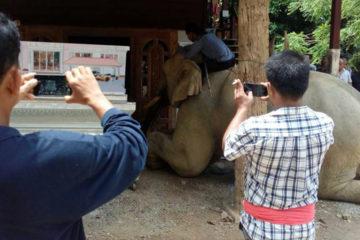 知道「爸爸」不在了,大象衝到他面前跪拜:謝謝這10年來的照顧