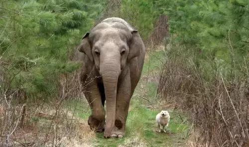 當大象遇見狗子,無法割捨的情誼