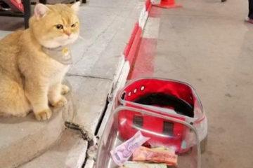 只是等拔拔吃飯,居然有人丟錢給牠!喵發現後怒吼:朕是那種缺錢的貓嗎?
