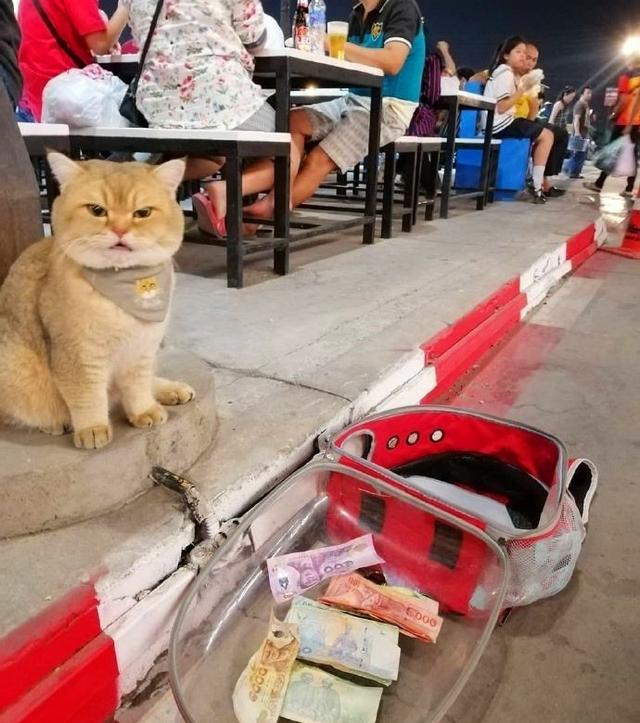 貓坐路邊等主人吃飯,居然有人往貓包裡扔錢!貓當場氣炸