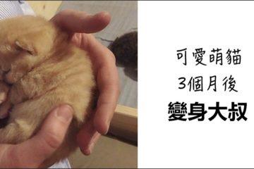 「貓寶寶」甜睡好軟萌 3個月後 竟變懶洋洋大叔